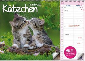 Duo Kalender Kätzchen bei Weltbild